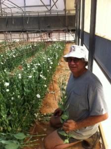 Eyal picking lilies